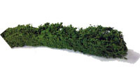 JHEDGENEXTRA - Javis - Extra Large Hedging (Pack of 3)