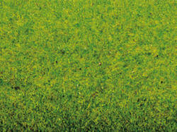 Noch - Static Grass Mat - Spring Meadow (300 x 100cm) - N00020