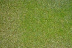 Noch - Static Grass Mat - Mounting Meadow - 00250
